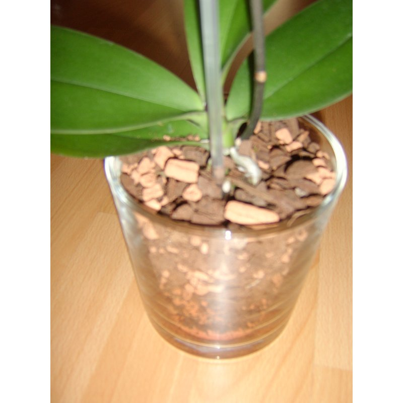 seramis orchideen granulat 2 5 liter 3 99 hydrokultur. Black Bedroom Furniture Sets. Home Design Ideas