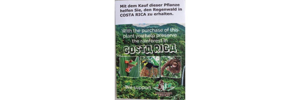 Helfen Sie uns dabei, den Regenwald in Costa Rica zu schützen? -