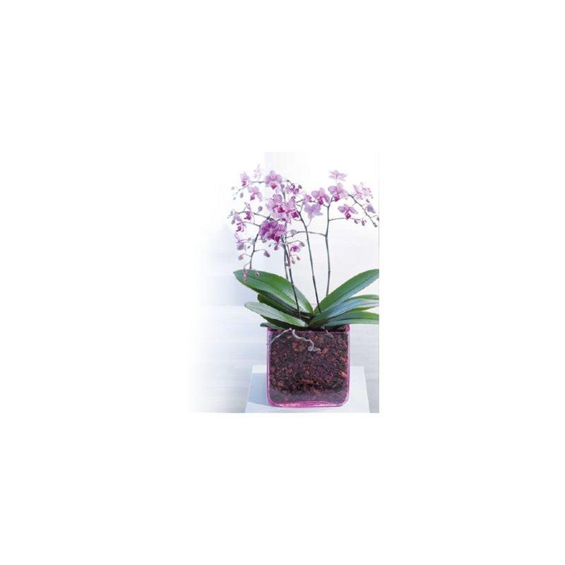 seramis orchideen granulat 2 5 liter 3 99 hydrokultur spezi. Black Bedroom Furniture Sets. Home Design Ideas